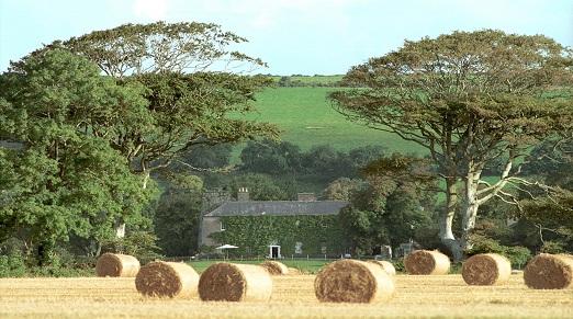 Ballymaloe hayfield