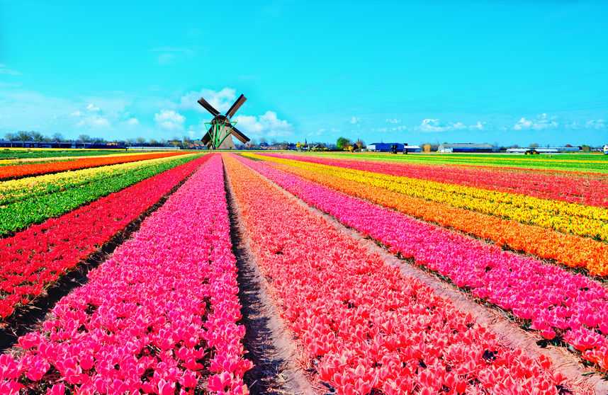 Garden in Netherlands