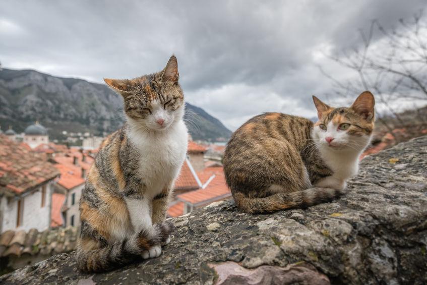 Cats in Kotor, Montenegro