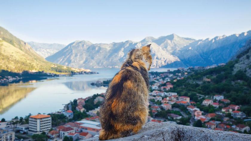 cat-museum-cotor-montenegro